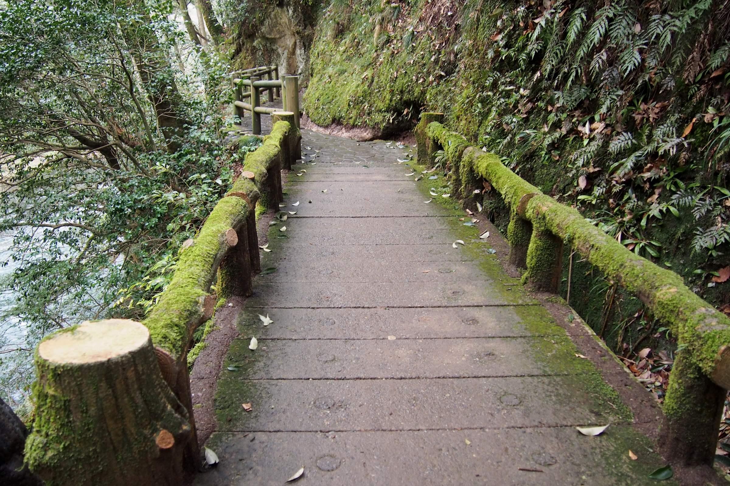 鶴仙渓と川床